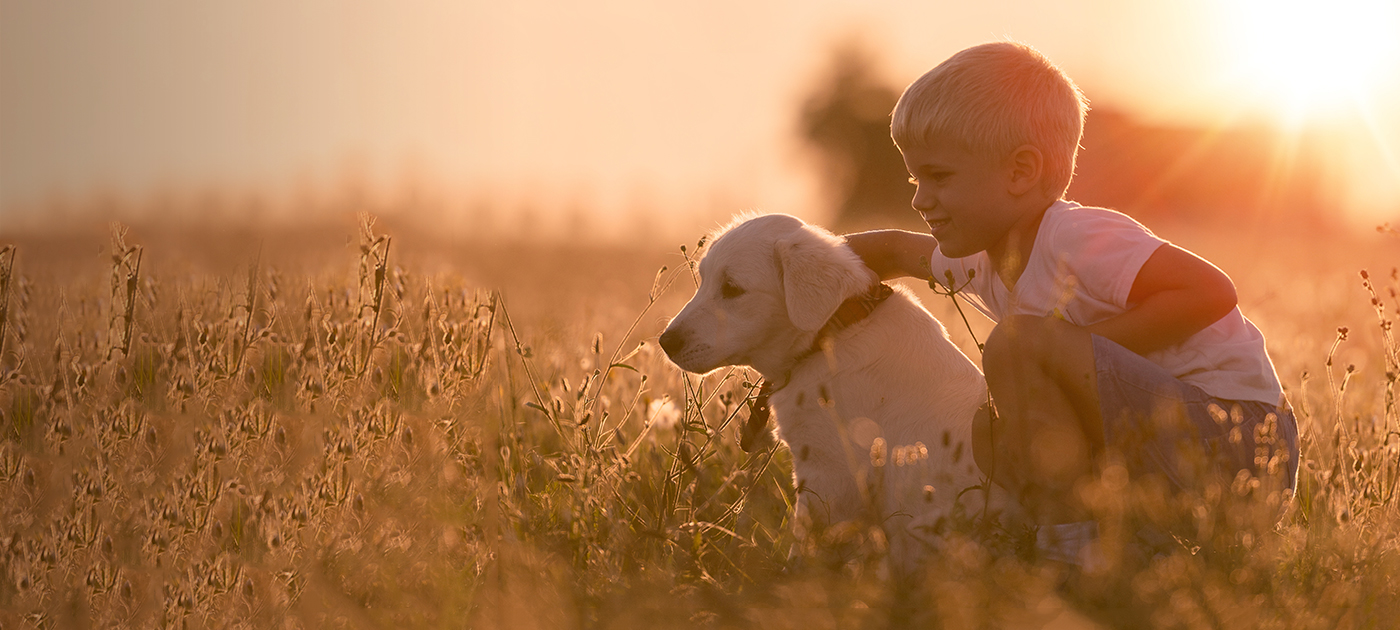 dog in a field with his owner